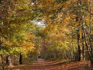 Étang du Cora - Étang du Corra - Forêt de Saint Germain en Laye