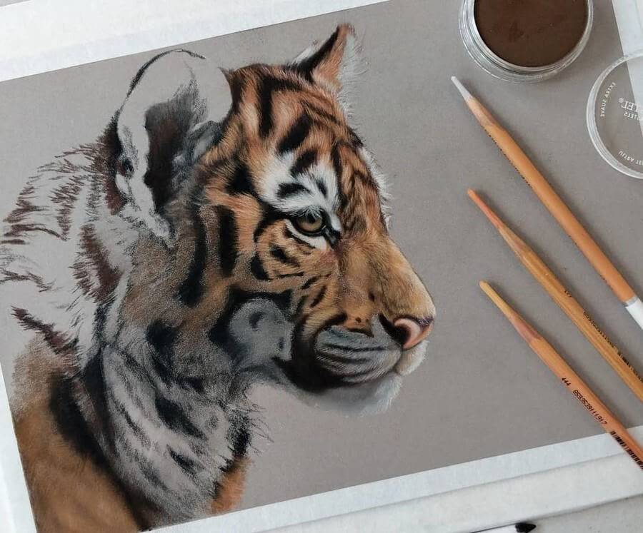 07-Tiger-Cub-WIP-Tatjana-Bril-Pastel-Drawings-of-Detailed-Animals-www-designstack-co