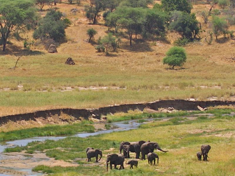 tropical savanna biome