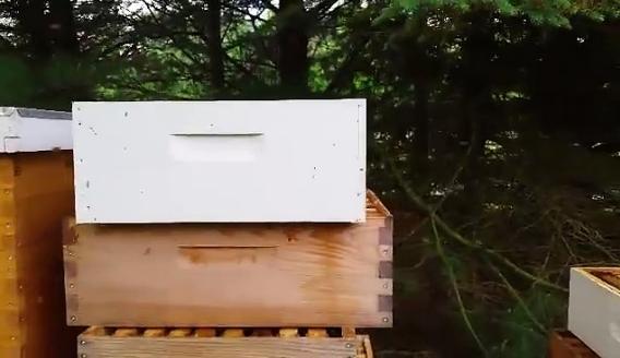 Καθαρισμών τρυγημένων κηρηθρών & πατωμάτων Αποτελεσματική μέθοδος μελισσοκόμου VIDEO