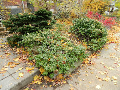 Riverdale Fall Cleanup Front Garden Before by Paul Jung Gardening Services--a Toronto Organic Gardening Services Company