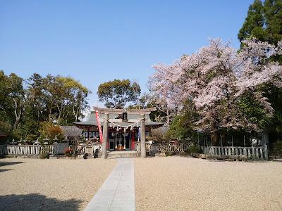 機物神社・拝殿と桜
