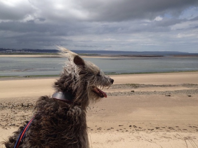 William the Lurcher blog