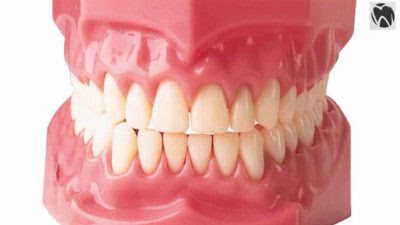 How many teeth do we have?