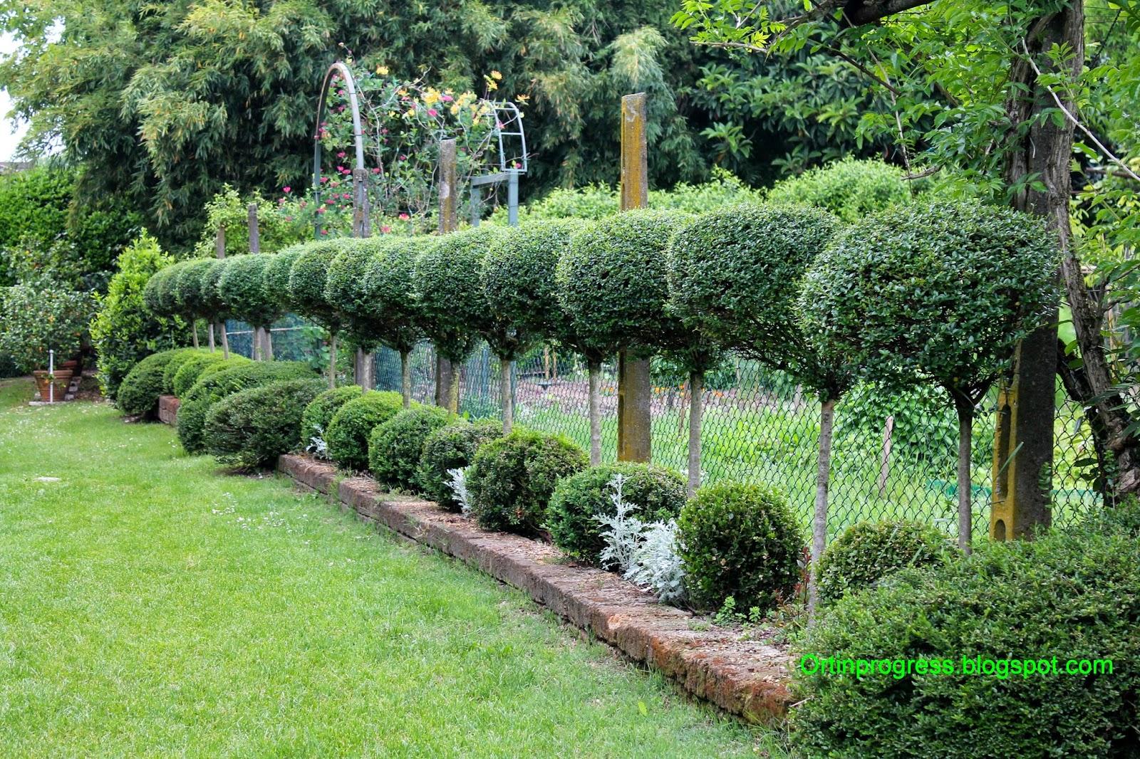 Orti in progress il giardino di casa biasi for Alberelli da esterno