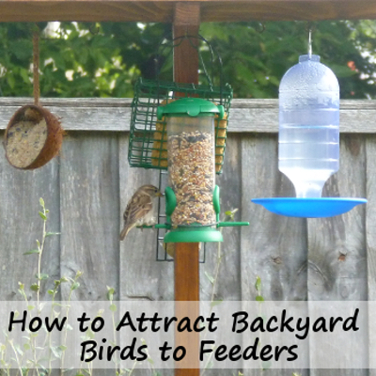 how to attract birds to feeders in your garden or backyard