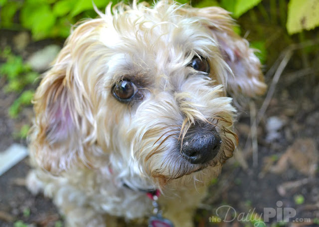 Ruby was adopted during Adopt-Senior-Pet-Month