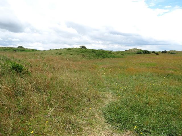 Snook - Lindisfarne