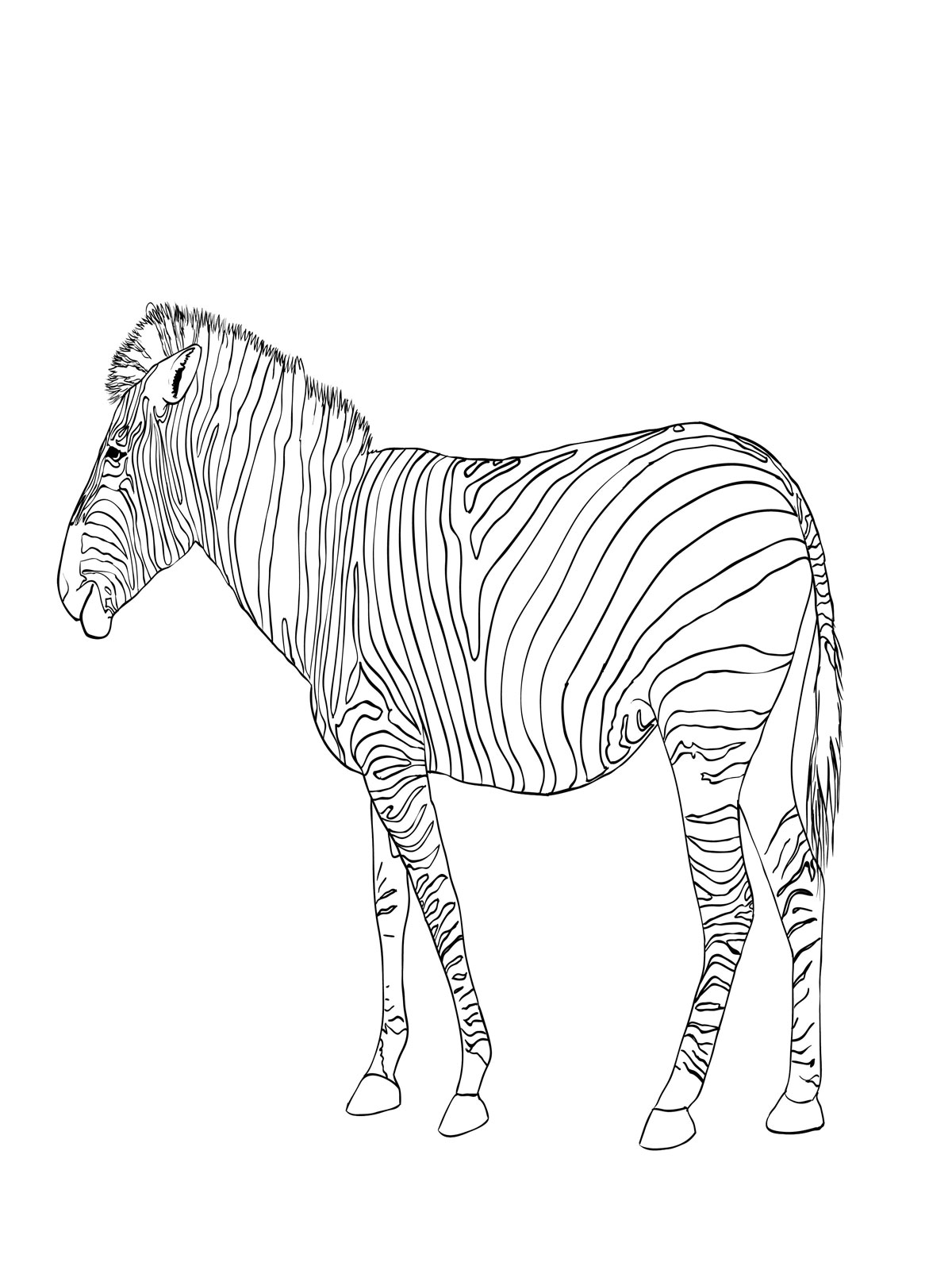 for kids coloring pages of zebra free coloring pages zebra