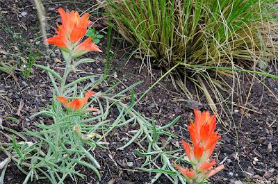 Linda cochran s garden castillejas
