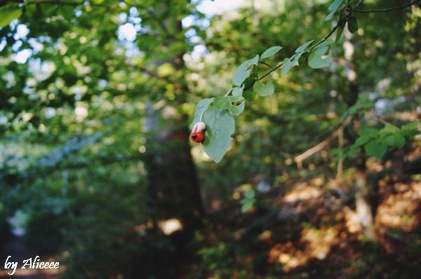 fructe-tampa-brasov