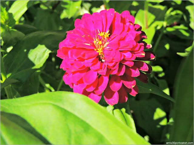 Flores del Ayuntamiento de Burlington en Vermont