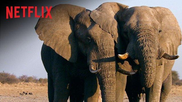 Trailer: O Extermínio do Marfim
