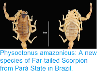 https://sciencythoughts.blogspot.com/2018/02/physoctonus-amazonicus-new-species-of.html