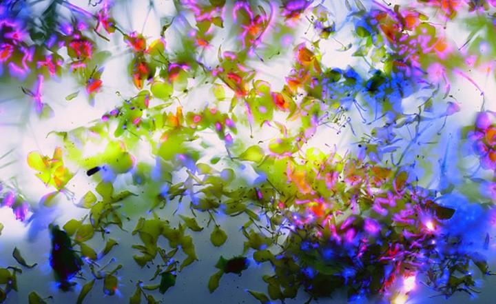 Robert Buelteman. Электрические цветы 17