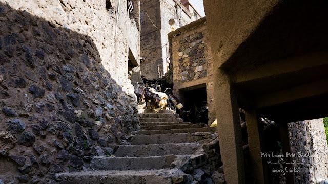 to toubkal peak atlas mountains village goats
