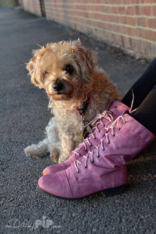 Dog waits for his person when pink meets black