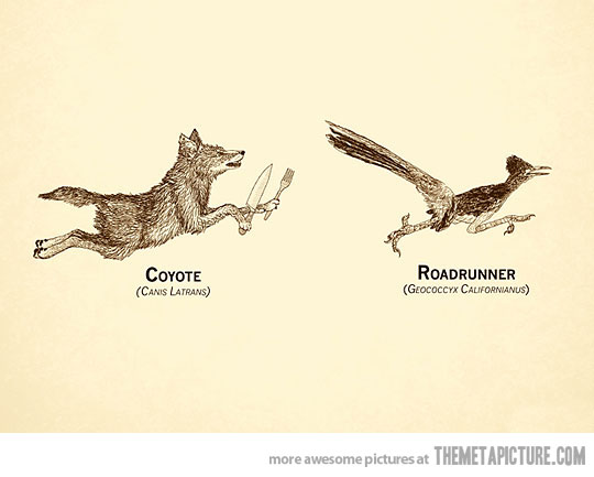 real coyote vs. roadrunner