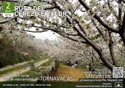 VIII Ruta Senderista del Cerezo en Flor (PR-CC2)