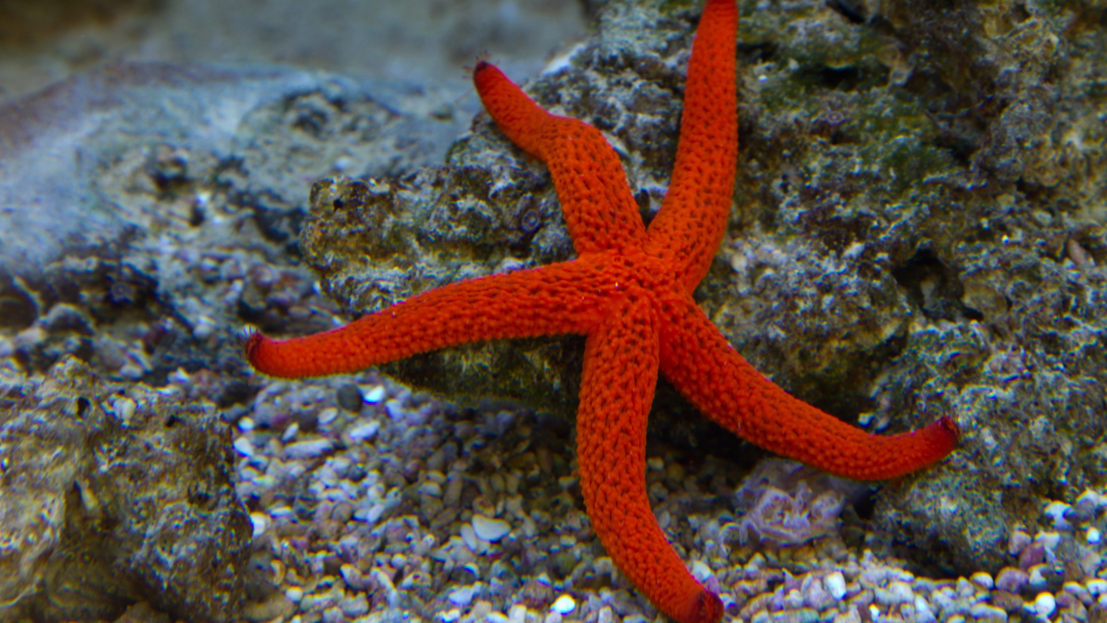 Starfish In Ocean