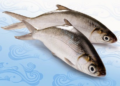Macam Umpan Jitu Mancing Ikan Air Payau