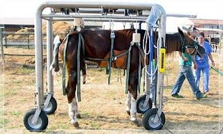 fisioterapia em cavalos