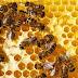 Deux garçons pourraient être emprisonnés pour avoir tué un demi-million d'abeilles
