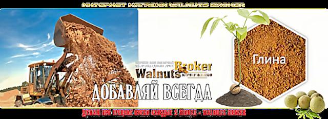 Как улучшить показатели гибридных орехов Идеал, Кочерженко, Иван Багряный?