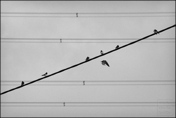 fotografia,aves,pajaros,cables,murcia