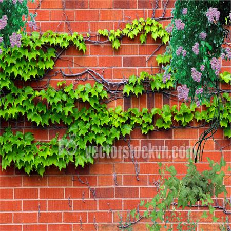 Tranh hoa dây leo tranh dán tường