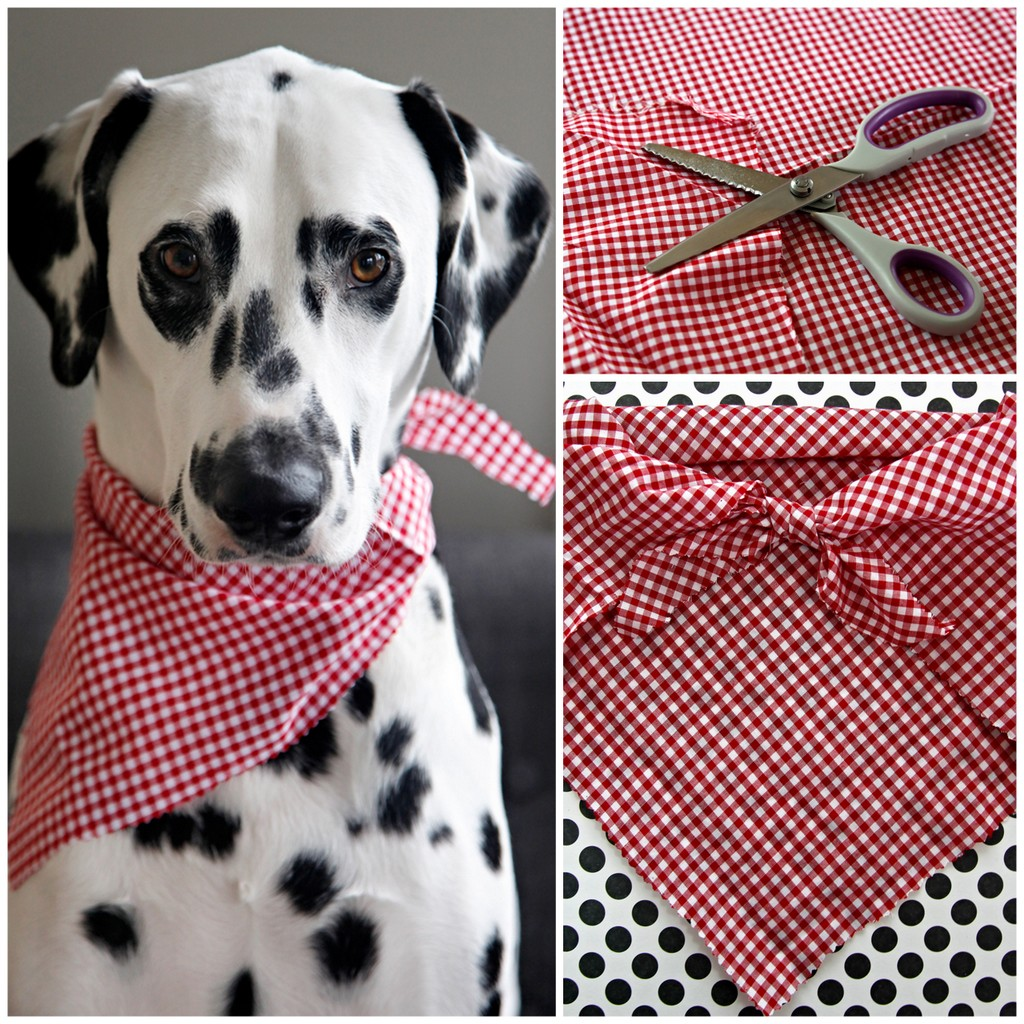 dog bandana template - dalmatian diy easy no sew pet bandana