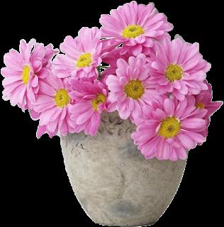 Vaso de crisântemo rosa