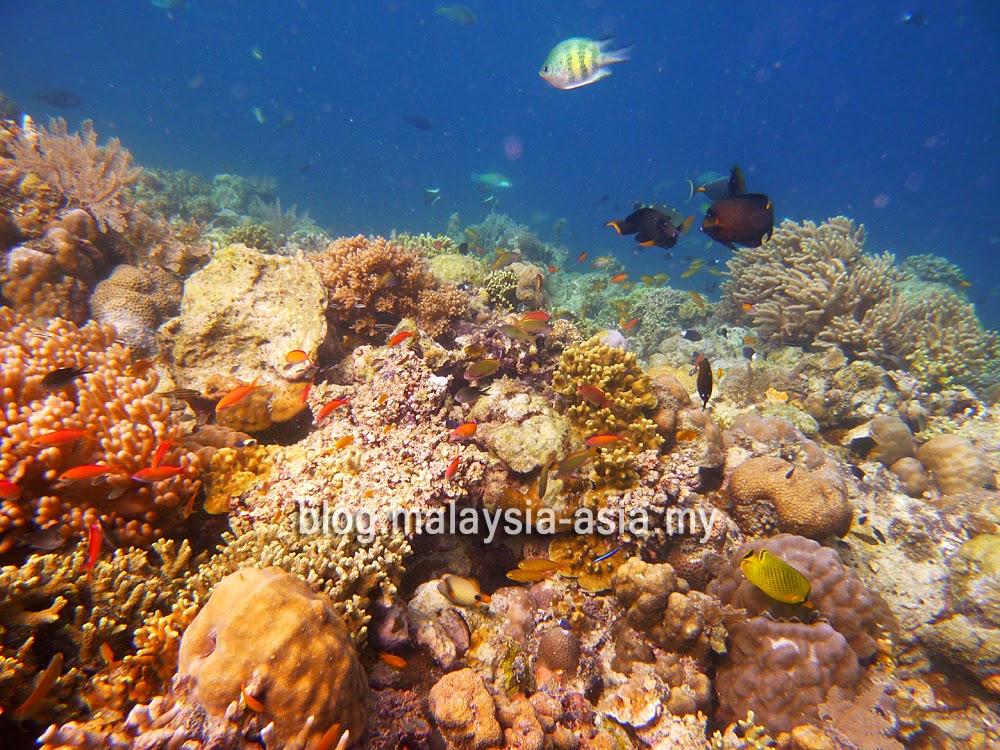 Mabul Island Snorkeling