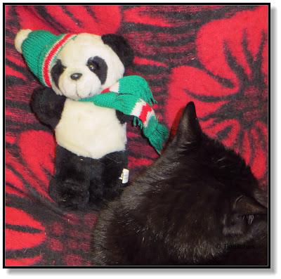 ein Panda Bär für die Katze