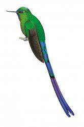 silfos colibris y picaflores
