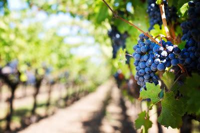 Vin : La production mondiale 2016 en recule de 5 % blog beaux-vins