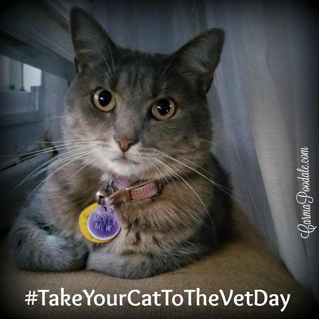 Molly Mew the #cat saying #takeyourcattothevetday