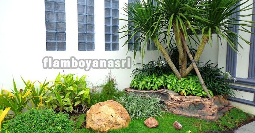 17 Tanaman Yang Bagus Ditanam Di Depan Rumah Tukang Taman Surabaya