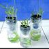Budidaya Tanaman Sayuran Dengan Cara Hidroponik