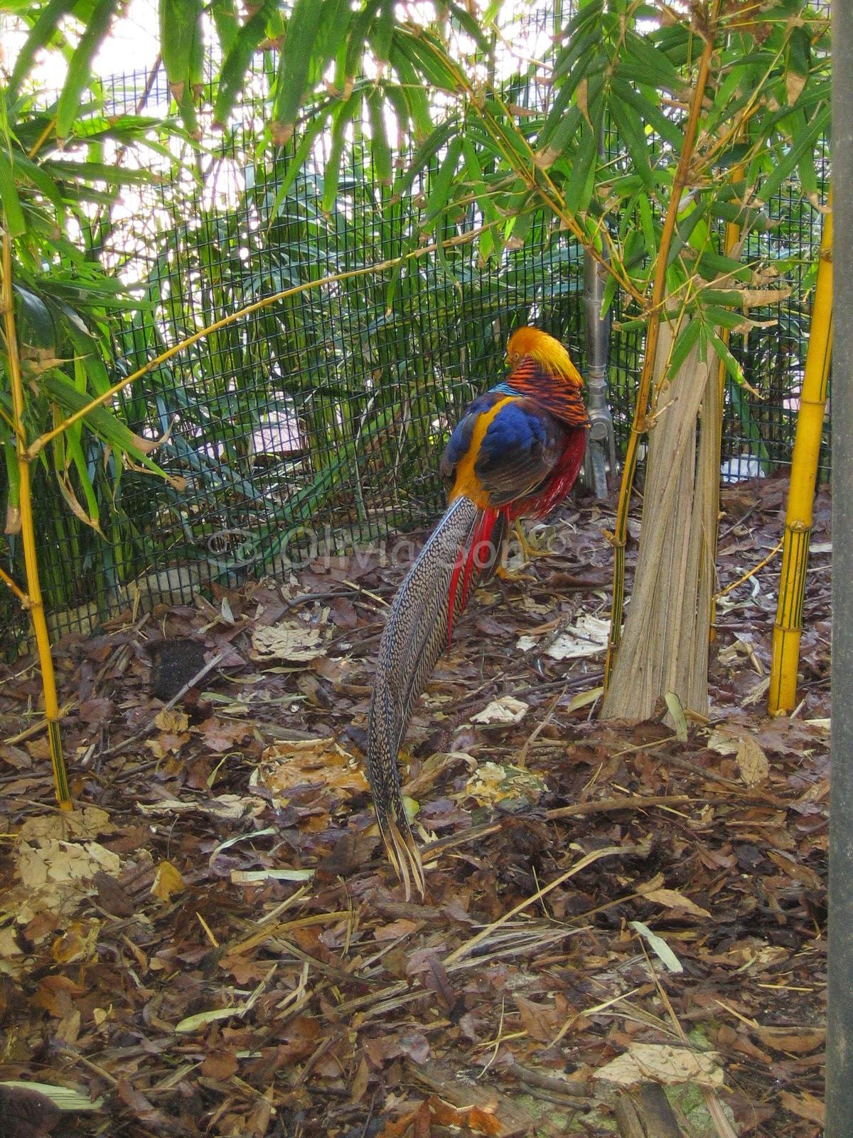 Oiseau Taronga Zoo, Sydney, Australie