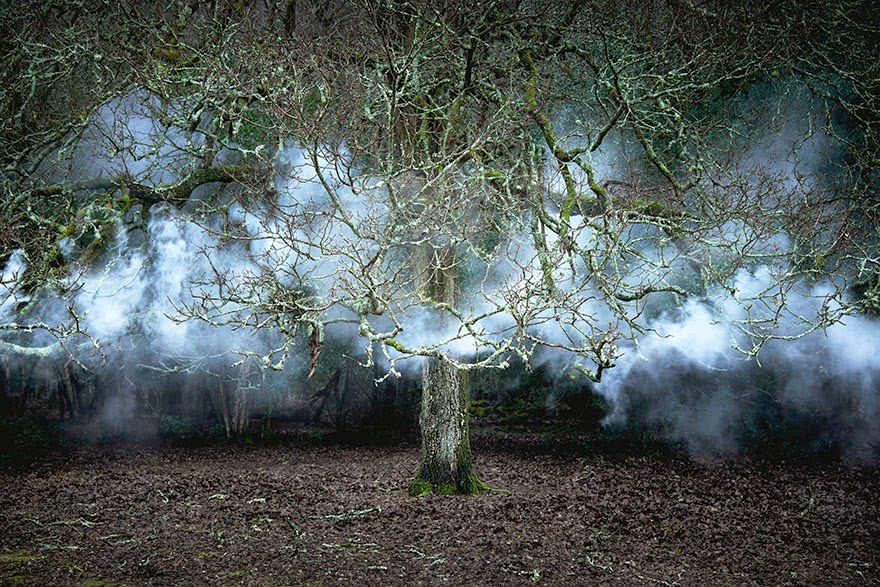 Pretvarala šumu u umjetnička djela