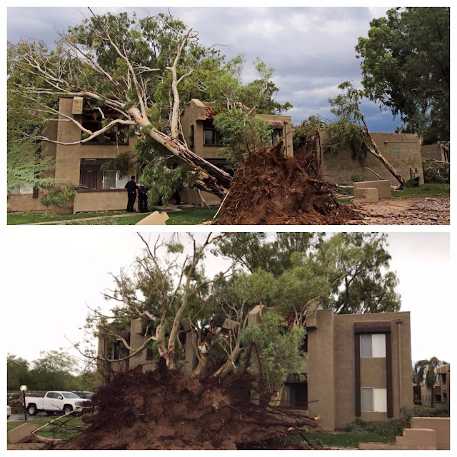 Tuscon tree uprooted and hits apartment building after storm