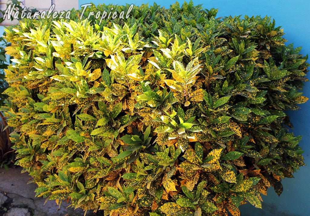 Naturaleza tropical tienes poco tiempo para dedicarle al - Arbustos de jardin ...