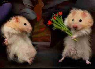 flowers rat dog meme funny