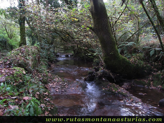 Ruta de los Molinos del Rio Profundo: Sendero resbaladizo