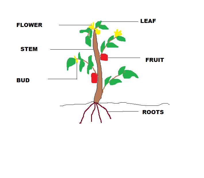 Parts of a plant for kids clipart