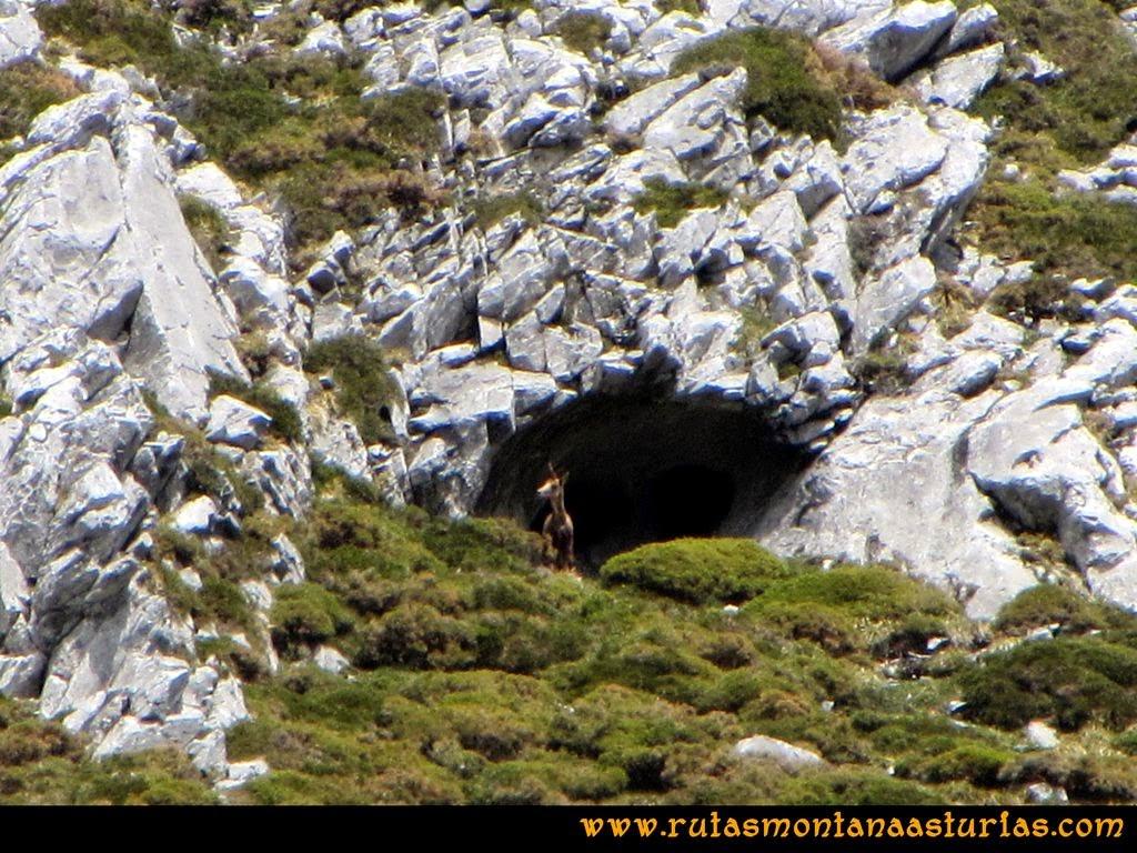 Ruta Peña Redonda: Animal en la cueva observándonos