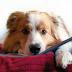 REPORT: Seminář Terapie psem, 1.- 2. 4. 2017
