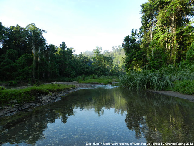 Wisata Nonton Burung di Papua Barat