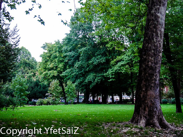 alberi Giardini Reali